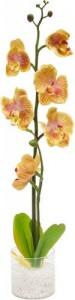 """PL307 Интерьерный декоративный светильник """"Орхидея"""",желтые цветы"""